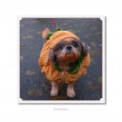 CELEBRITIES IN DISGUISE, Pumpkin