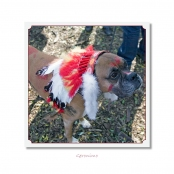 CELEBRITIES IN DISGUISE, Geronimo