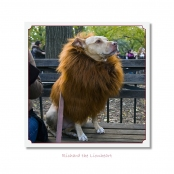 CELEBRITIES IN DISGUISE, Richard the Lionheart
