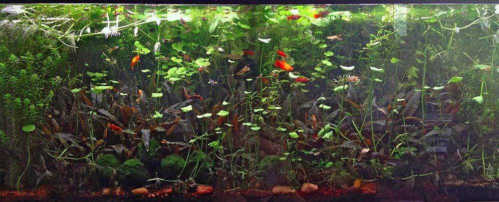 po_aquarium01_1000px