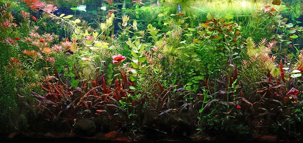 po_aquarium02_1000px