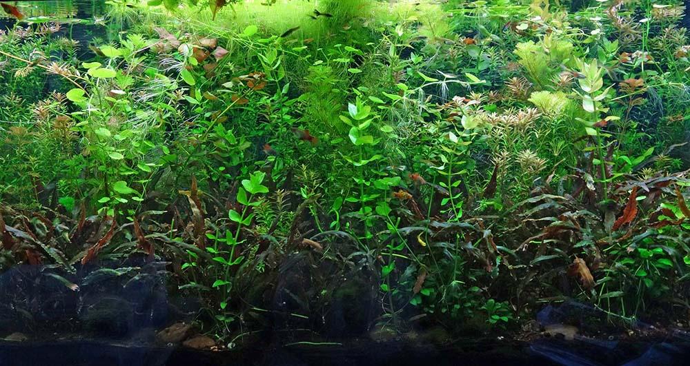 po_aquarium03b_1000px
