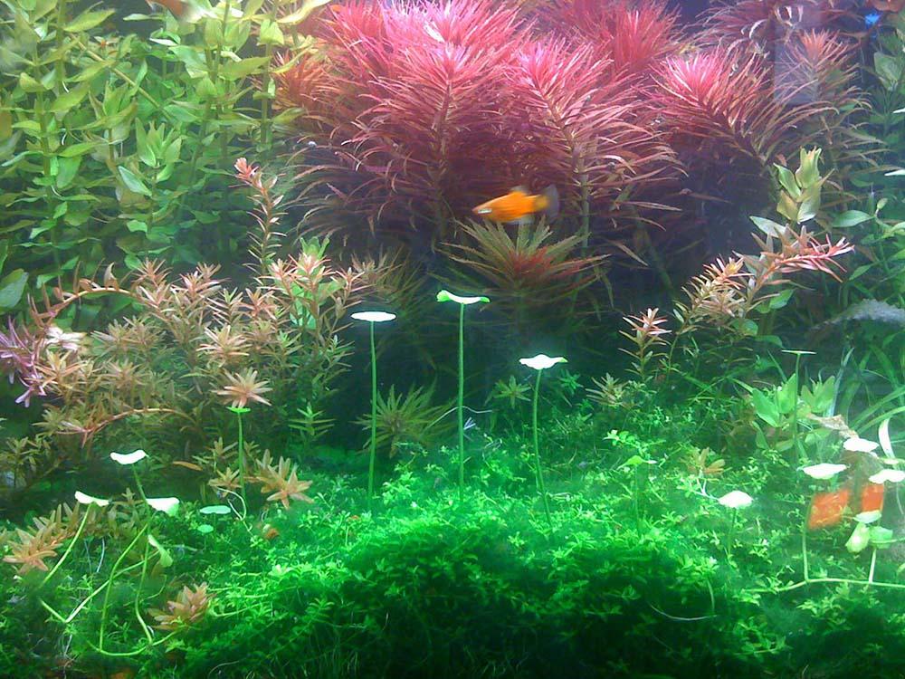 po_aquarium04_1000px