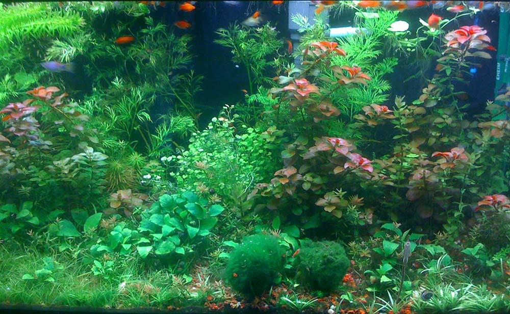 po_aquarium05_1000px