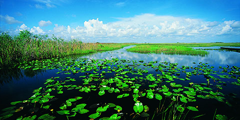 po_Park-Everglades-National4