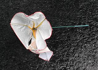 po_Creativity-Umbrella
