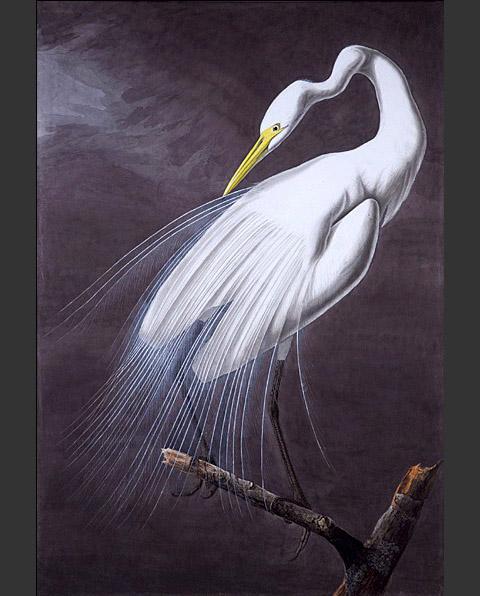 po_Audubon-John6
