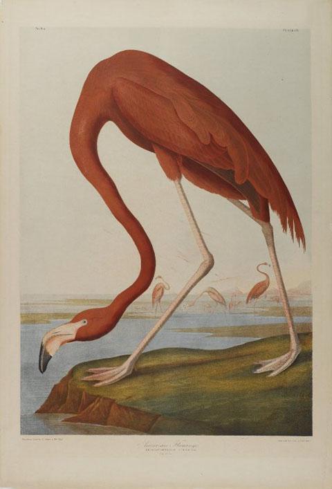 po_Audubon-John9