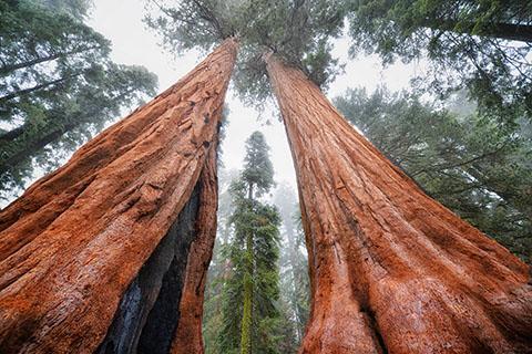 po_Sequoia-National-Park2
