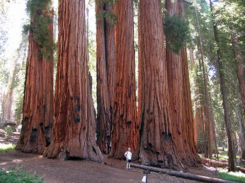 po_Sequoia-National-Park4