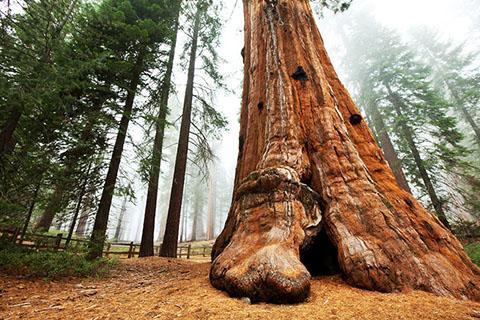 po_Sequoia-National-Park5