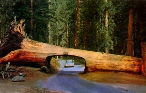 po_Sequoia-National-Park6